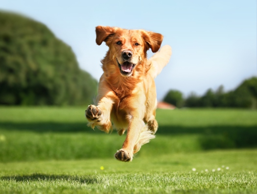 Running_Dog_Background.jpg